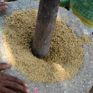 Rechte stärken Dalits getreide stampfen