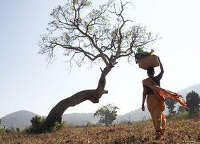 Indische Frau mit Korb auf dem Kopf vor einem Baum